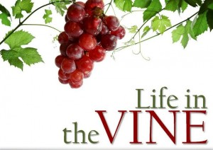 05 life in the vine