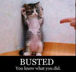 12 busted